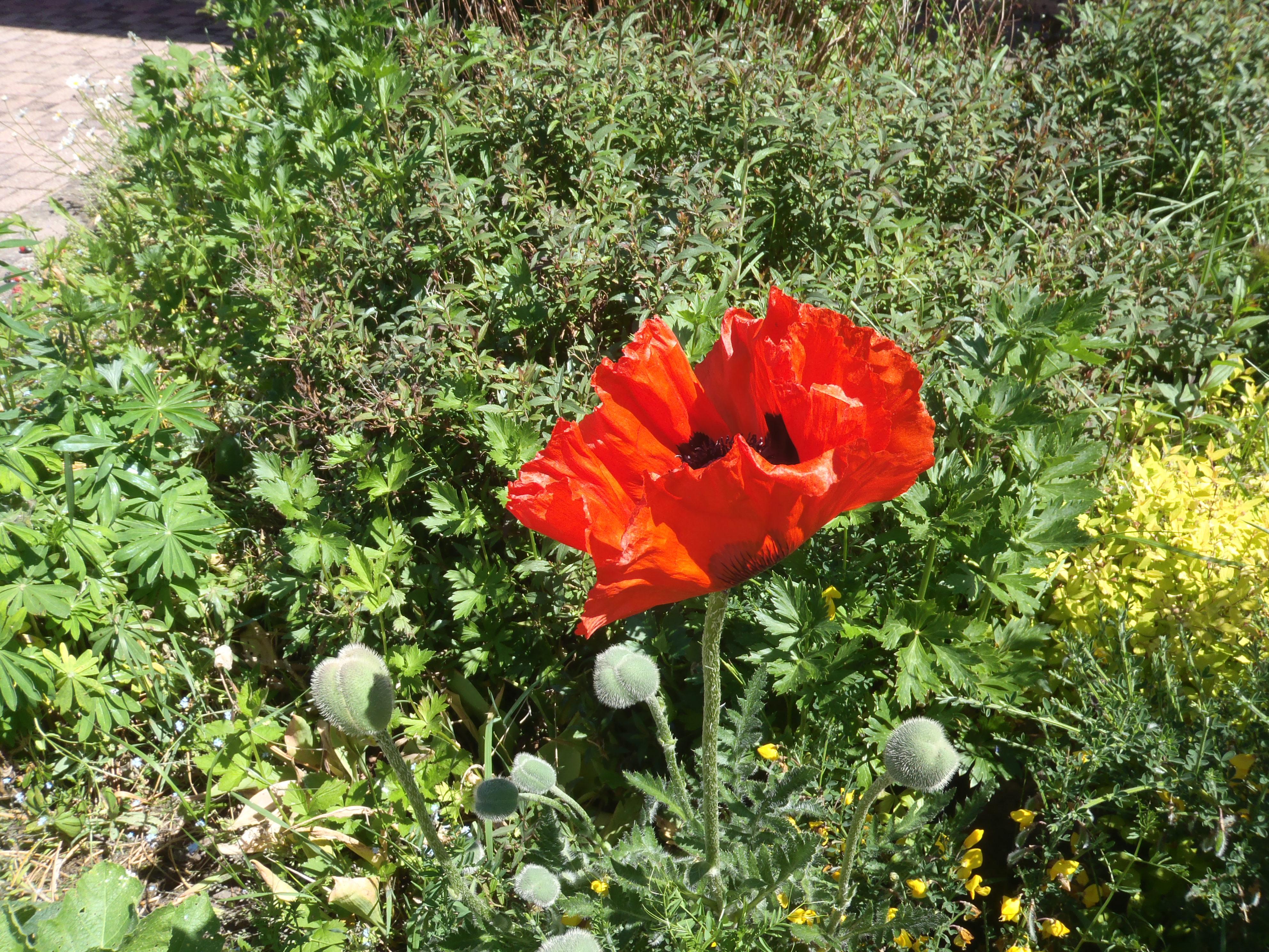 Fleurs Saulxures